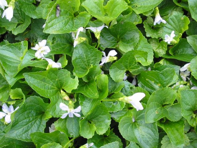 Grün Farbe Im Garten Bedeutung Redensarten Und Mehr