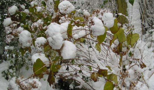 fotogalerie garten und pflanzenfotos impressionen aus unserem privatgarten im schnee. Black Bedroom Furniture Sets. Home Design Ideas