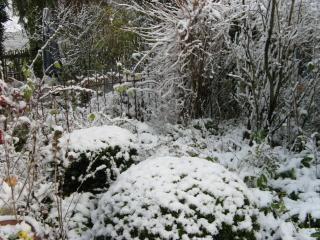 Mein Garten im Schnee