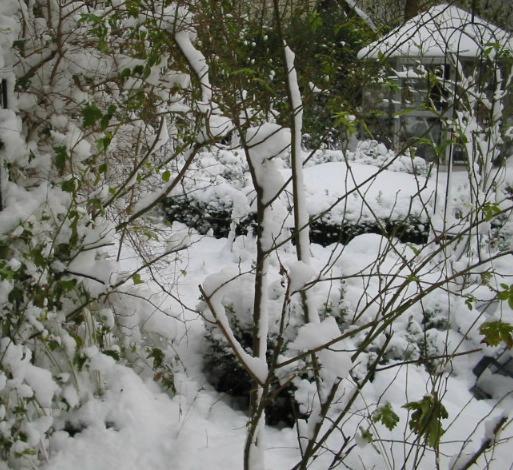 Mein Garten im Schnee 2008