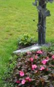 Kreuz mit Ginkgoblattschmuck - Allerseelentag Foto Brandt